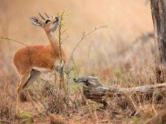 Jabulani-Safari-Wildlife-6
