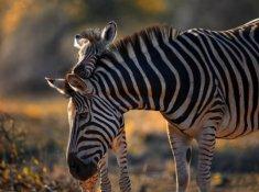 Jabulani-Safari-Wildlife-7