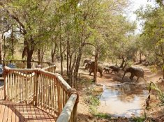 Elephants-from-nare-Suite
