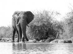 Jacis-Lodges-Elephant