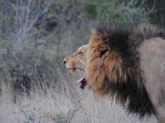 Jackalberry-Lodge-Wildlife-5