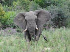 Jackalberry-Lodge-Wildlife-6