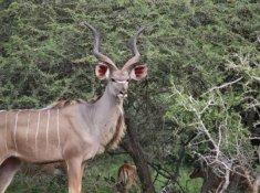 Jackalberry-Lodge-Wildlife-7