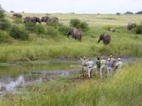 Kapama Game Reserve Walking Safari