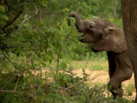 Kapama Game Lodges Elephant