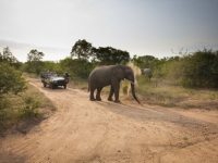 Kapama Game Lodges Elephant Sighting