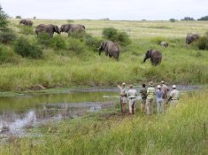 Kapama-Game-Reserve-Safari-Walk