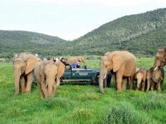 Kariega-River-Lodge-Elephant-Sighting