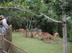 Karkloof-Safari-Villas-10