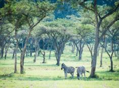Karkloof-Safari-Villas-9
