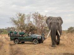 Karongwe-River-Lodge-Game-Drive