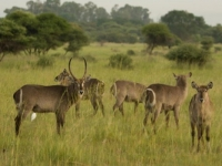 Kedar Wildlife