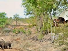 Hamiltons Tented Camp Elephant Sighting