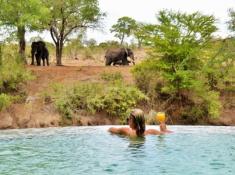 Imbali Safari Lodge Swimming Pool and Elephants
