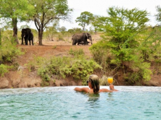 Imbali Safari Lodge Swimming Pool and Elephants