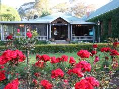 hartford-red-rose-garden-hr