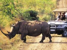 hluhluwe-rhino