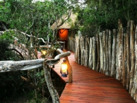 Lalibela Tree Tops Walkway