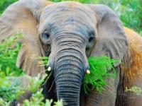 Legend Golf & Safari Resort Elephant Sighting