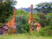 Legend Golf & Safari Resort Game Sighting