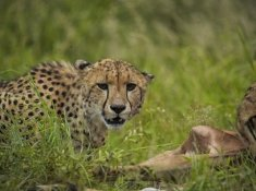 Leopard-Mountain-Safari-5