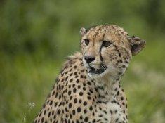 Leopard-Mountain-Safari-8