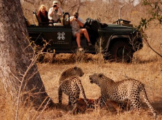 Londolozi-Landrover-at-Leopards