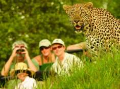 Londolozi-Leopard-Sighting