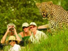 Londolozi-Leopard-Sighting