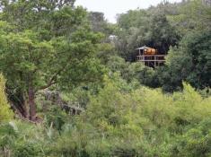 Londolozi-Tree-Camp-Exterior