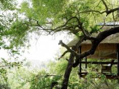 Londolozi-Tree-Camp-Setting