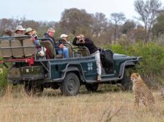 Londolozi-Cheetah-Sighting
