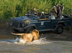 Londolozi-Lion-Sighting