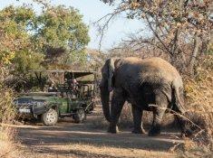 Mabula-Safari-Drive