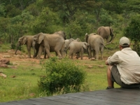 Makweti Wildlife 2