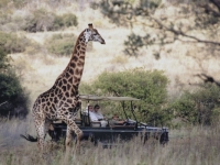 Makweti Wildlife 3