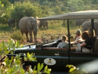 Makweti Wildlife 4