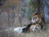 Makweti Wildlife 5