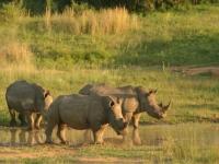 Makweti Wildlife 6