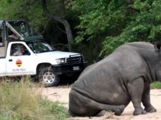 mfafa-safaris-rhino-sighting
