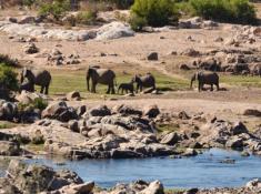 Mjejane River Lodge Elephants