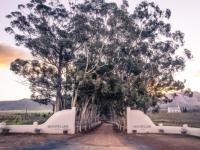 Montpellier Wine Estate