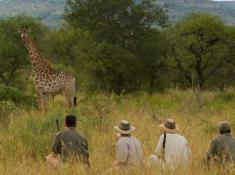 Morokolo Safari Lodge Bush Walk