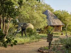 Motswari-Elephant-in-Camp