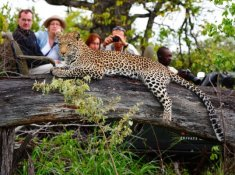 Motswari-Leopard-Sighting