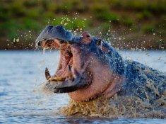 Motswari-Wildlife-2