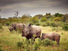 Motswari-Wildlife