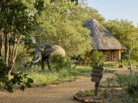 Motswari Elephant in Camp