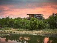 Motswari Giraffes Nest