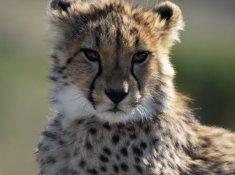 Nambiti-Hills-Wildlife-1